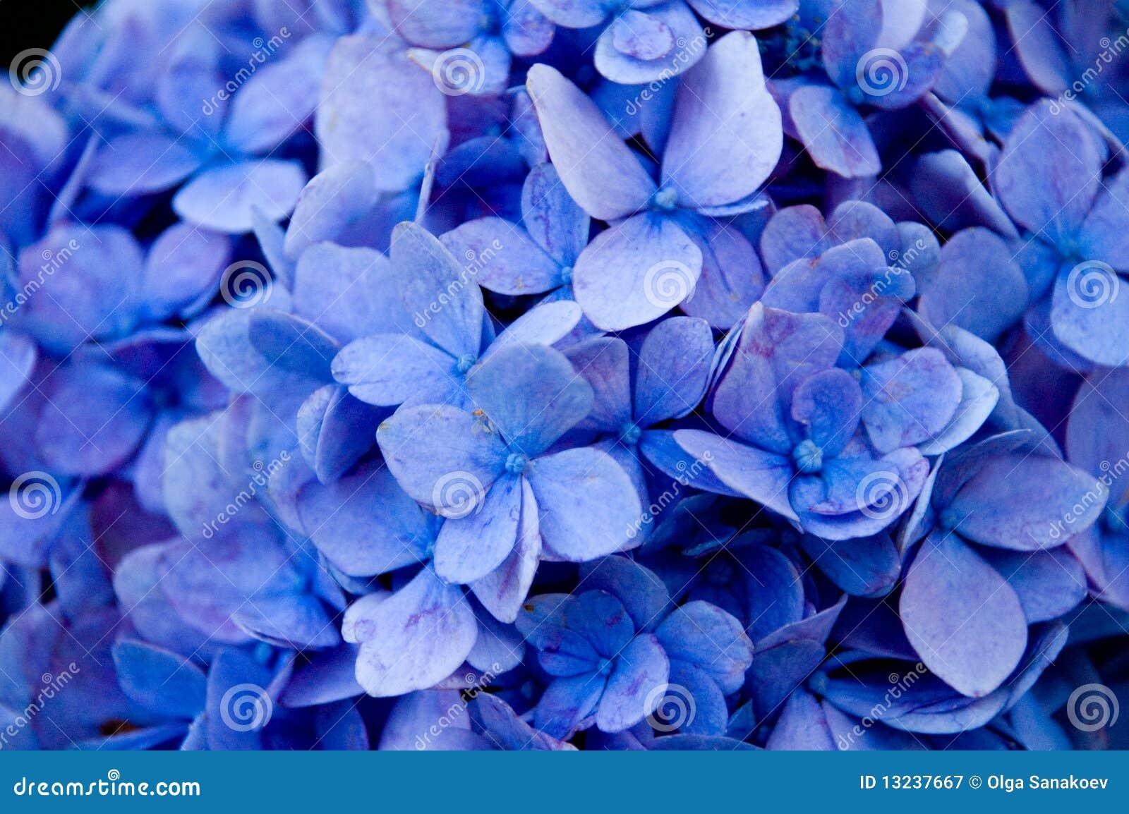 Täta blommor för blue upp