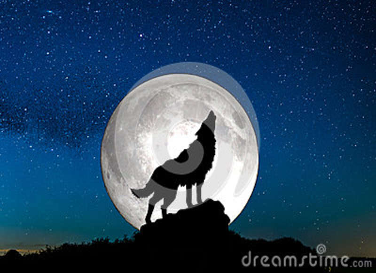 Tätt tjuta upp wolf