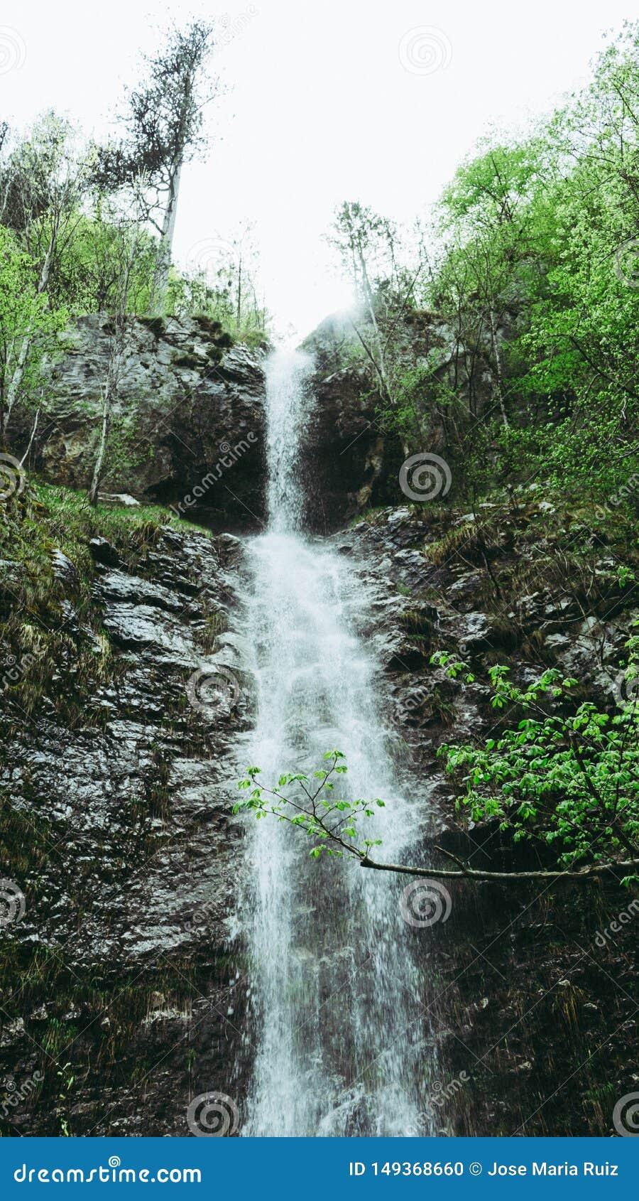 T?TT UPP: F?rnyande str?mvatten som fl?dar ner mossa, t?ckte bruna stenar i en h?rlig gr?n skog i Montenegro Filmiskt skott