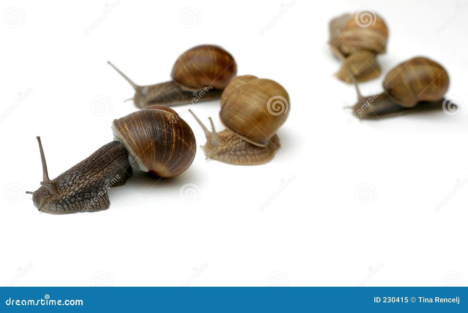 Tävlings- snails