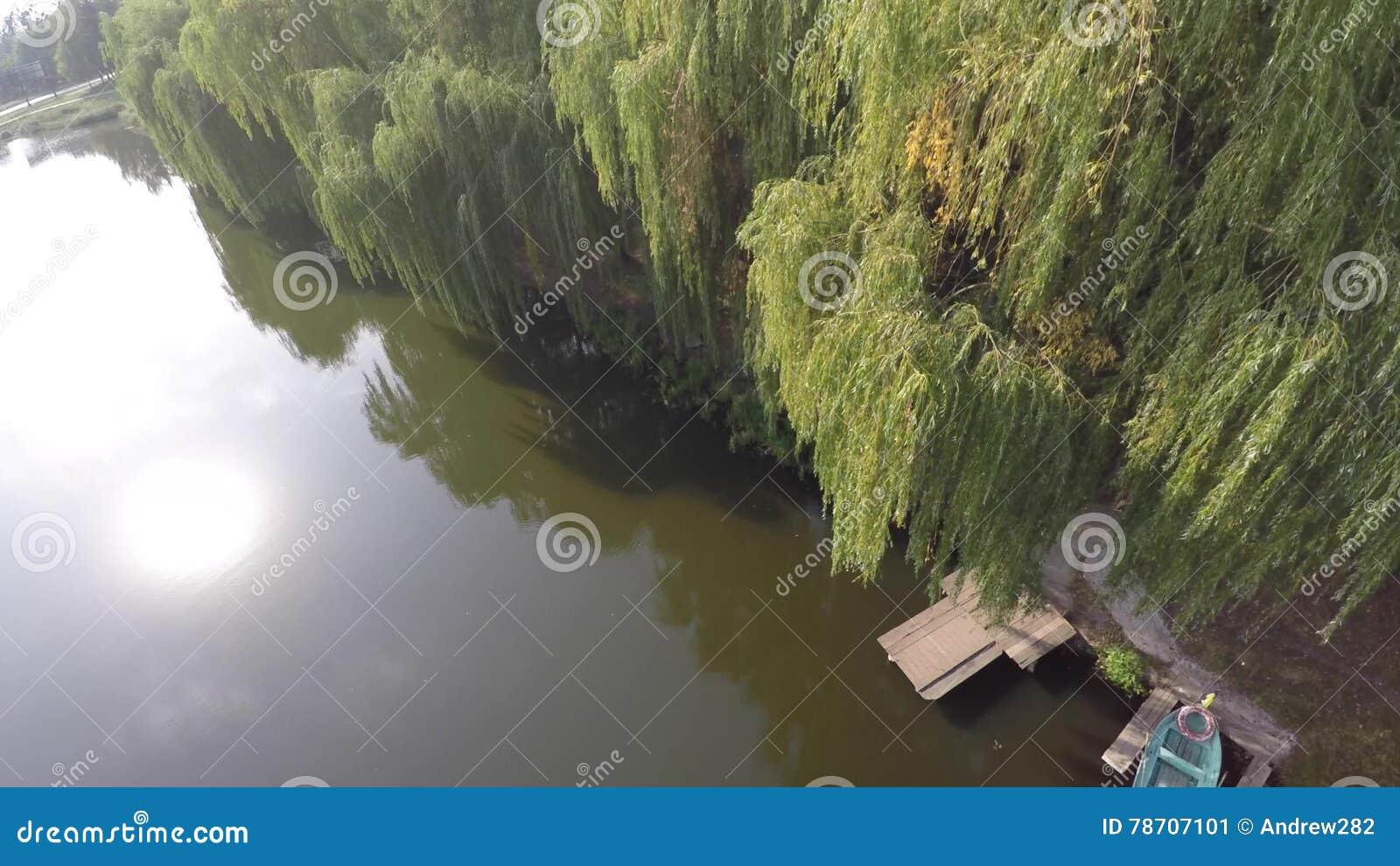 Tårpilträd reflekterade på en flod surr