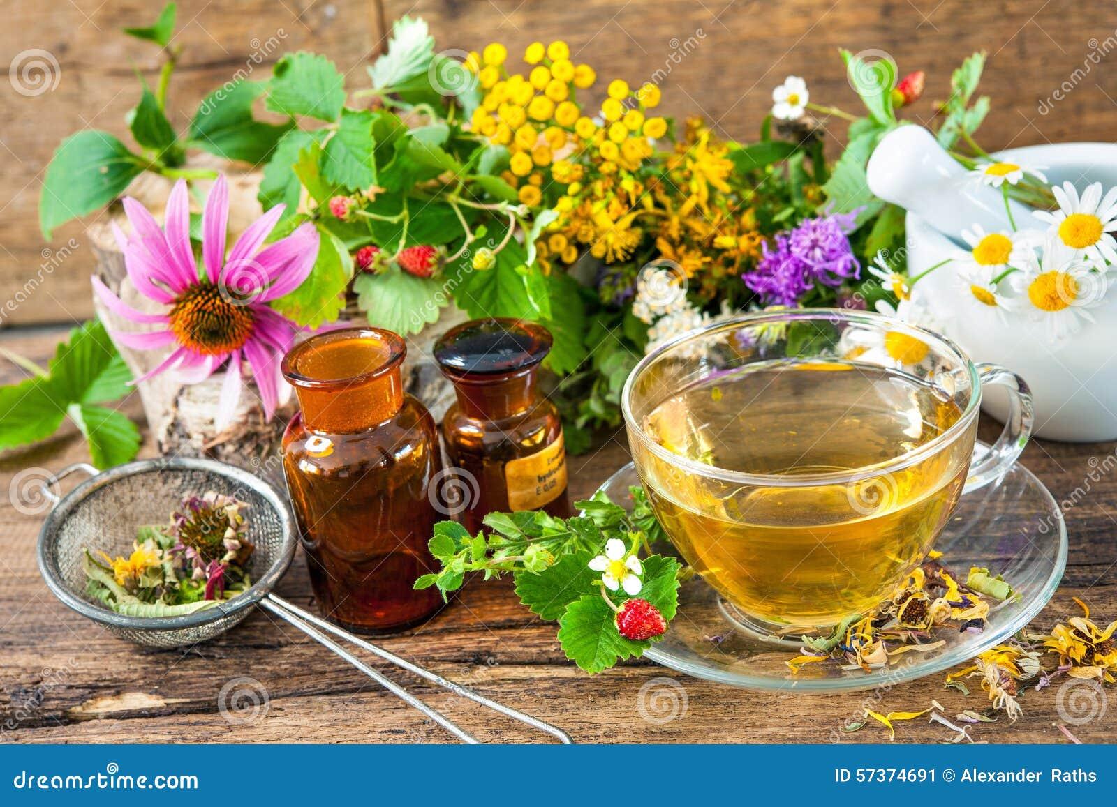Tè selettivo naturopathy di infusione di erbe di vetro del horsetail del fuoco del equisetum della tazza del arvense