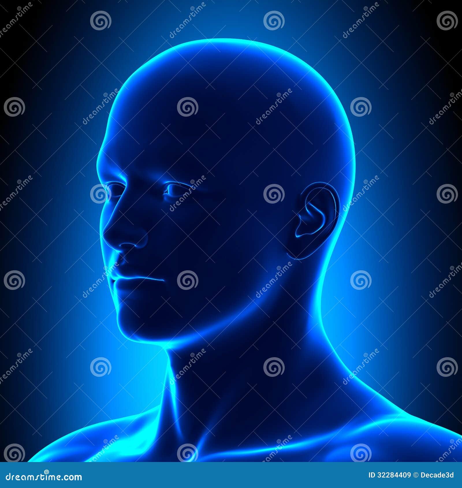 Tête d anatomie - OIN regardez le détail - concept bleu