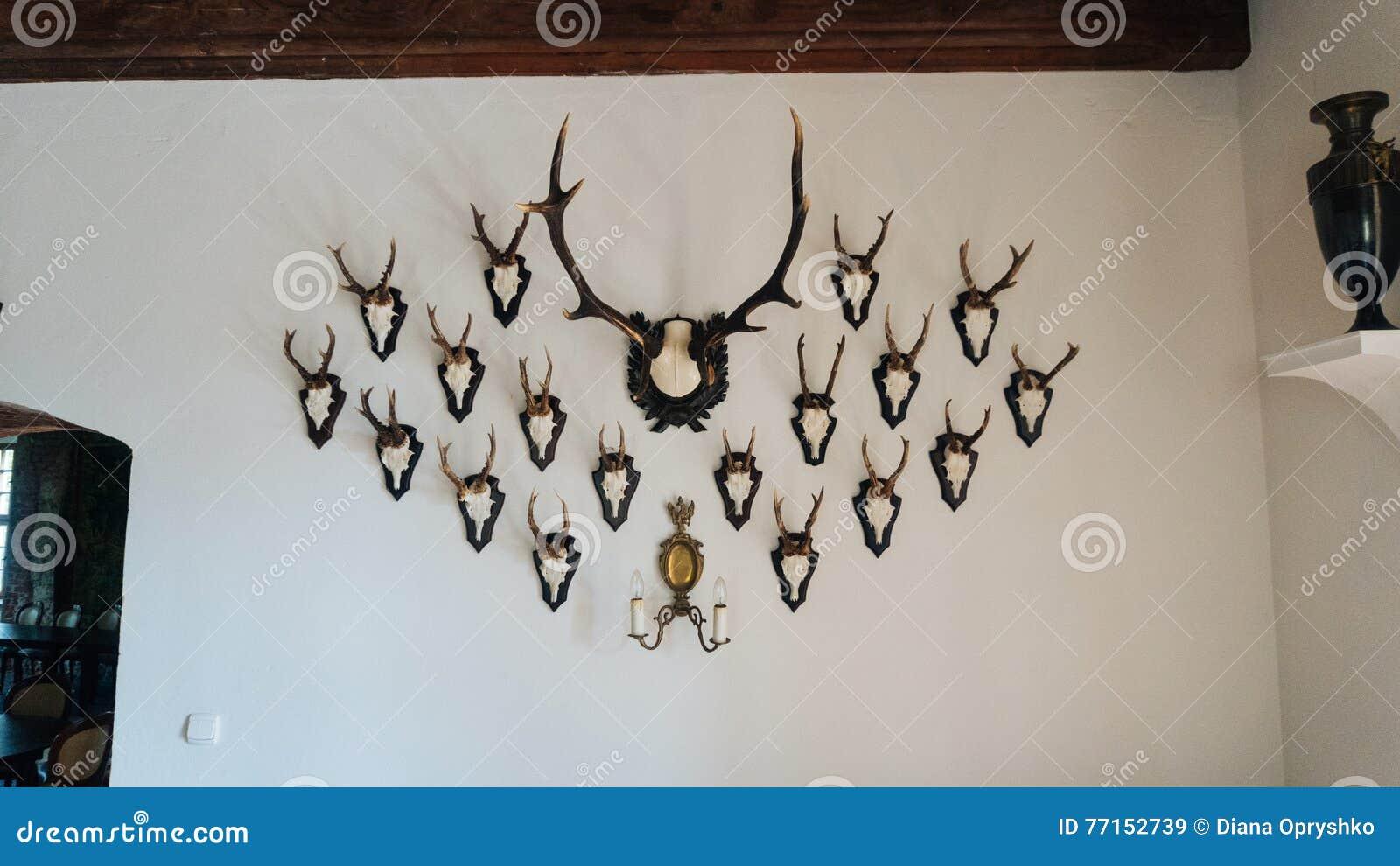Tête de cerfs communs sur le fond blanc de mur