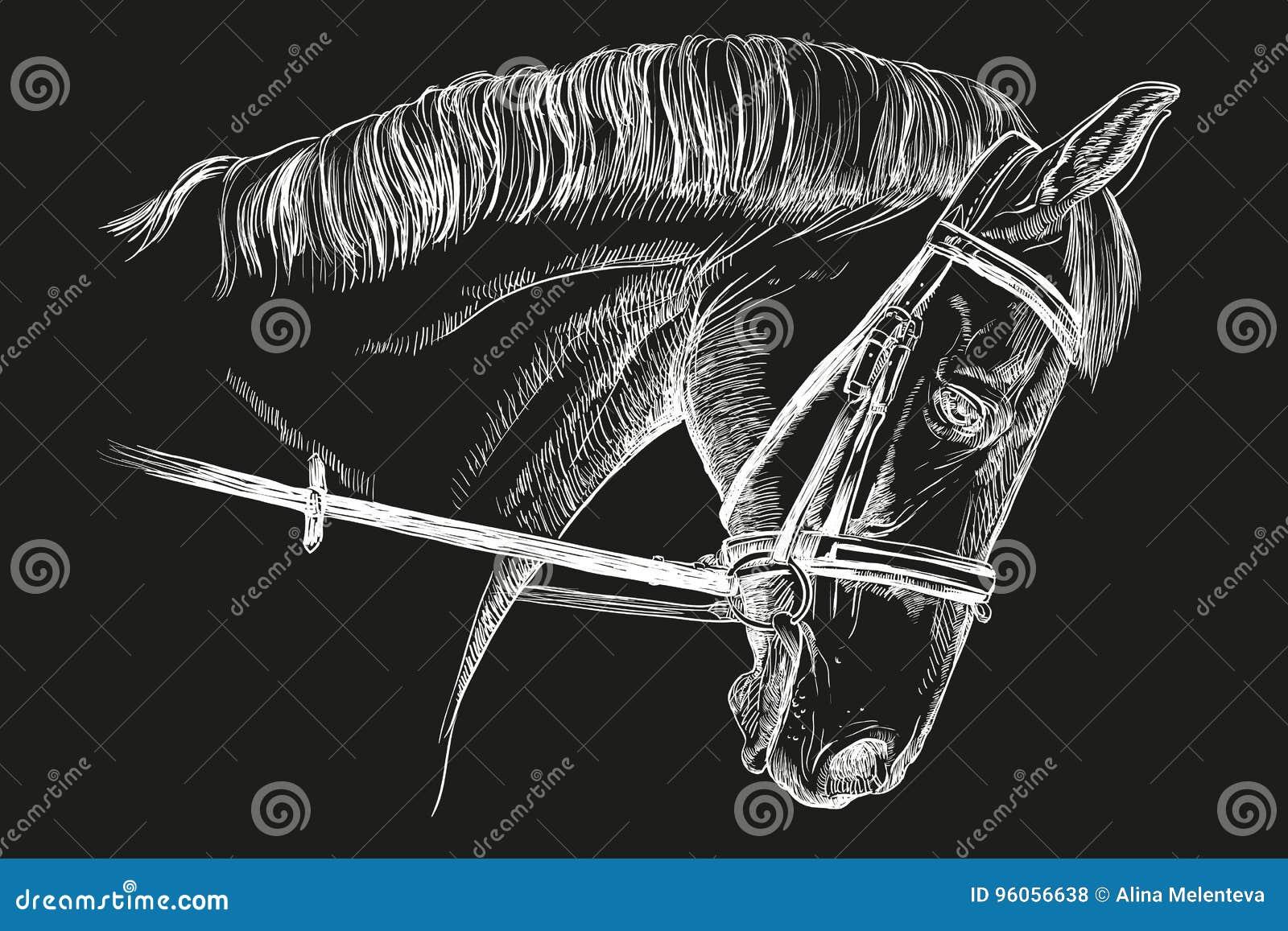 Tête de cheval avec le frein