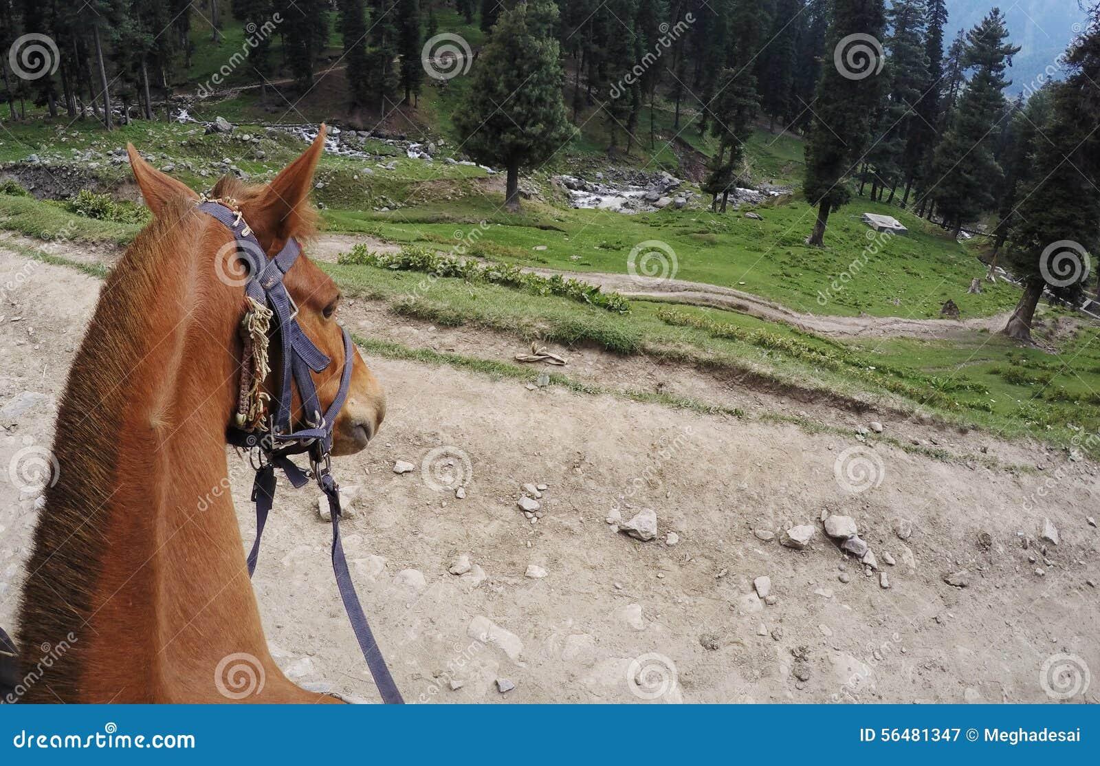 Tête de cheval brun