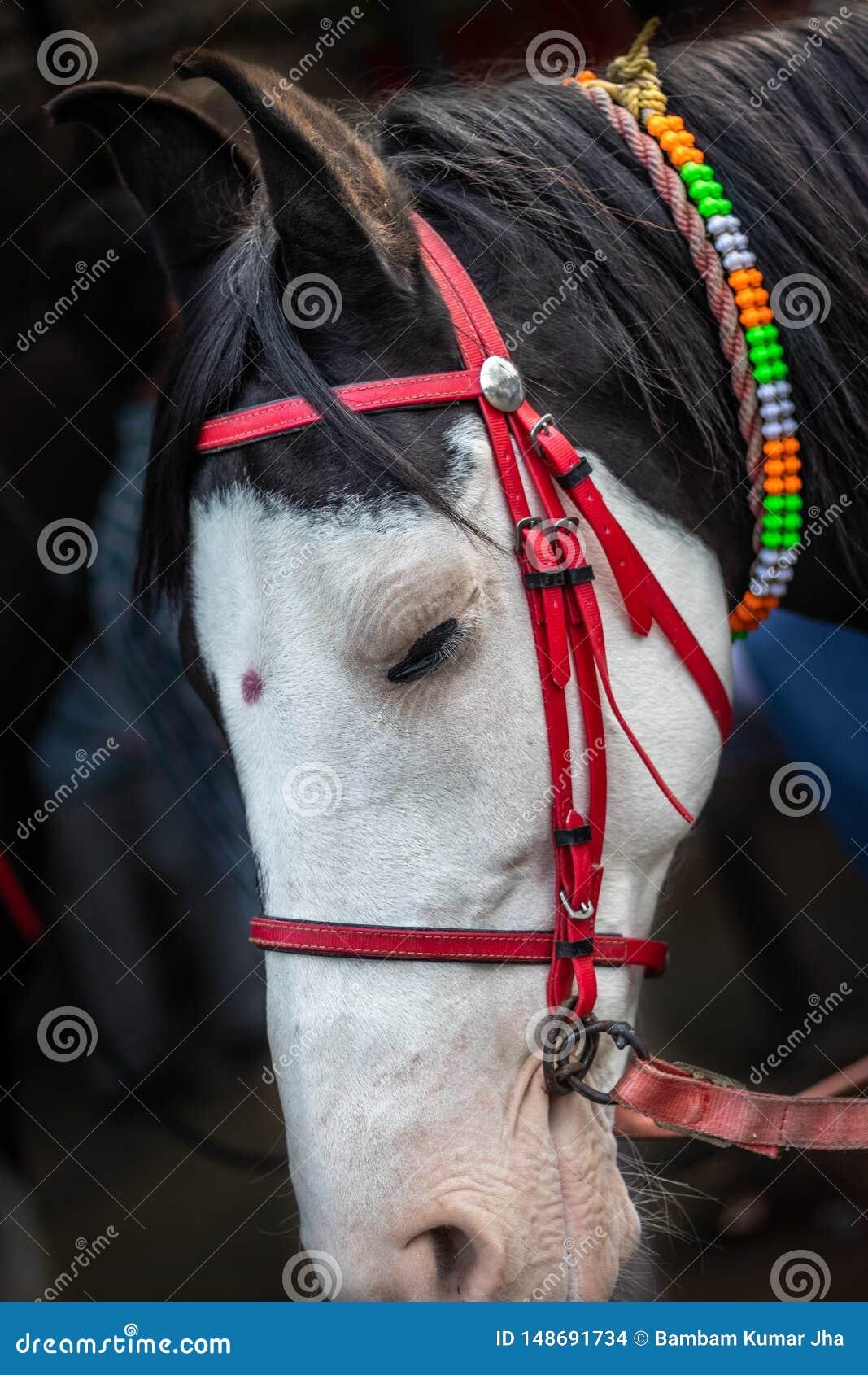 T?te de cheval d isolement avec la limite rouge de fil