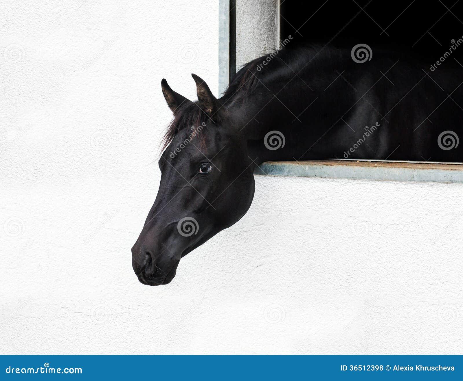 Tête de cheval regardant la fenêtre.