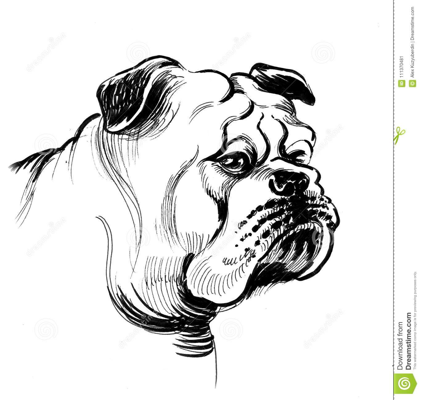 Tête De Chien De Taureau Illustration Stock Illustration Du