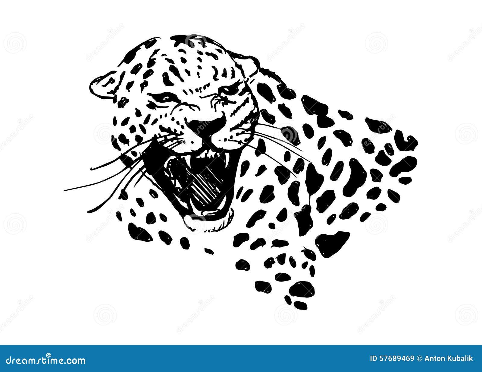 T te de jaguar d 39 hurlement illustration de vecteur - Jaguar dessin ...