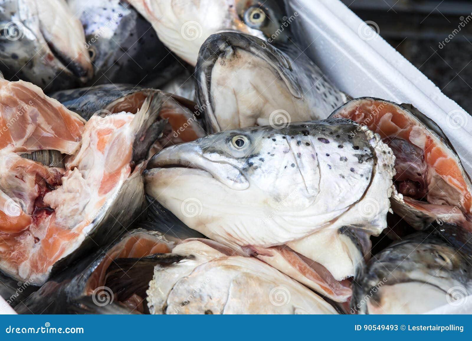 Têtes des poissons saumonés sur le marché
