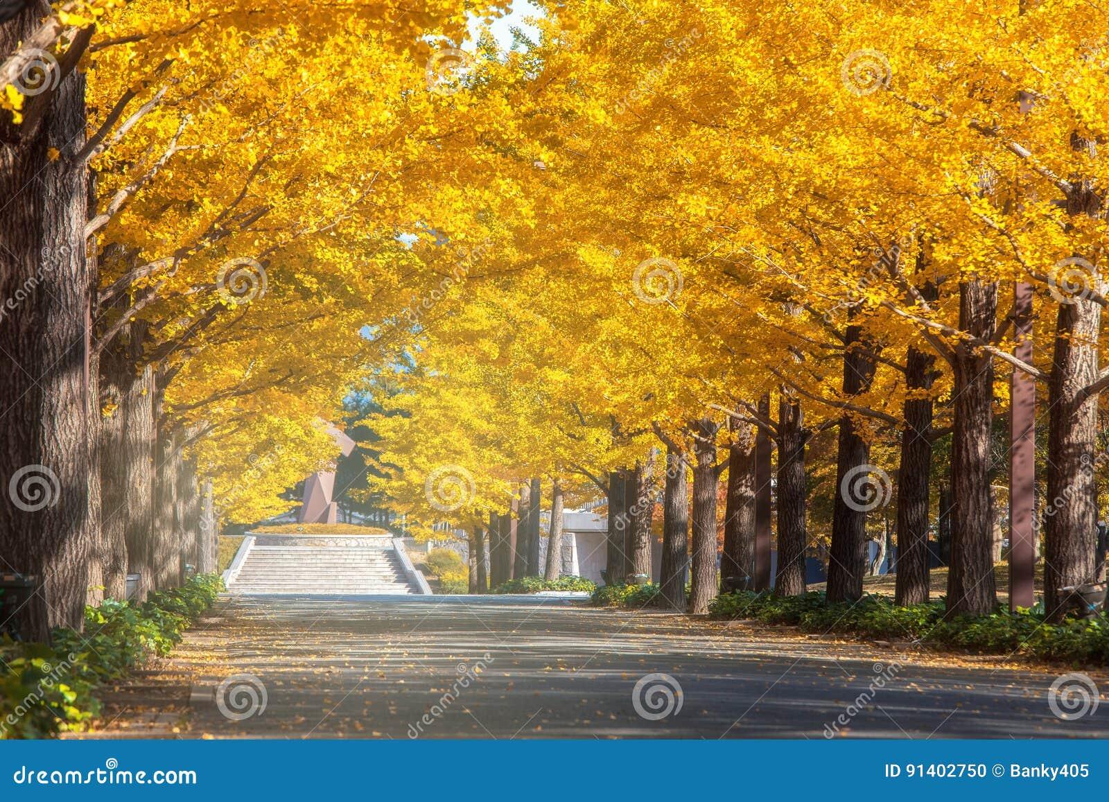 Tóquio, parque do outono de Japão em Japão