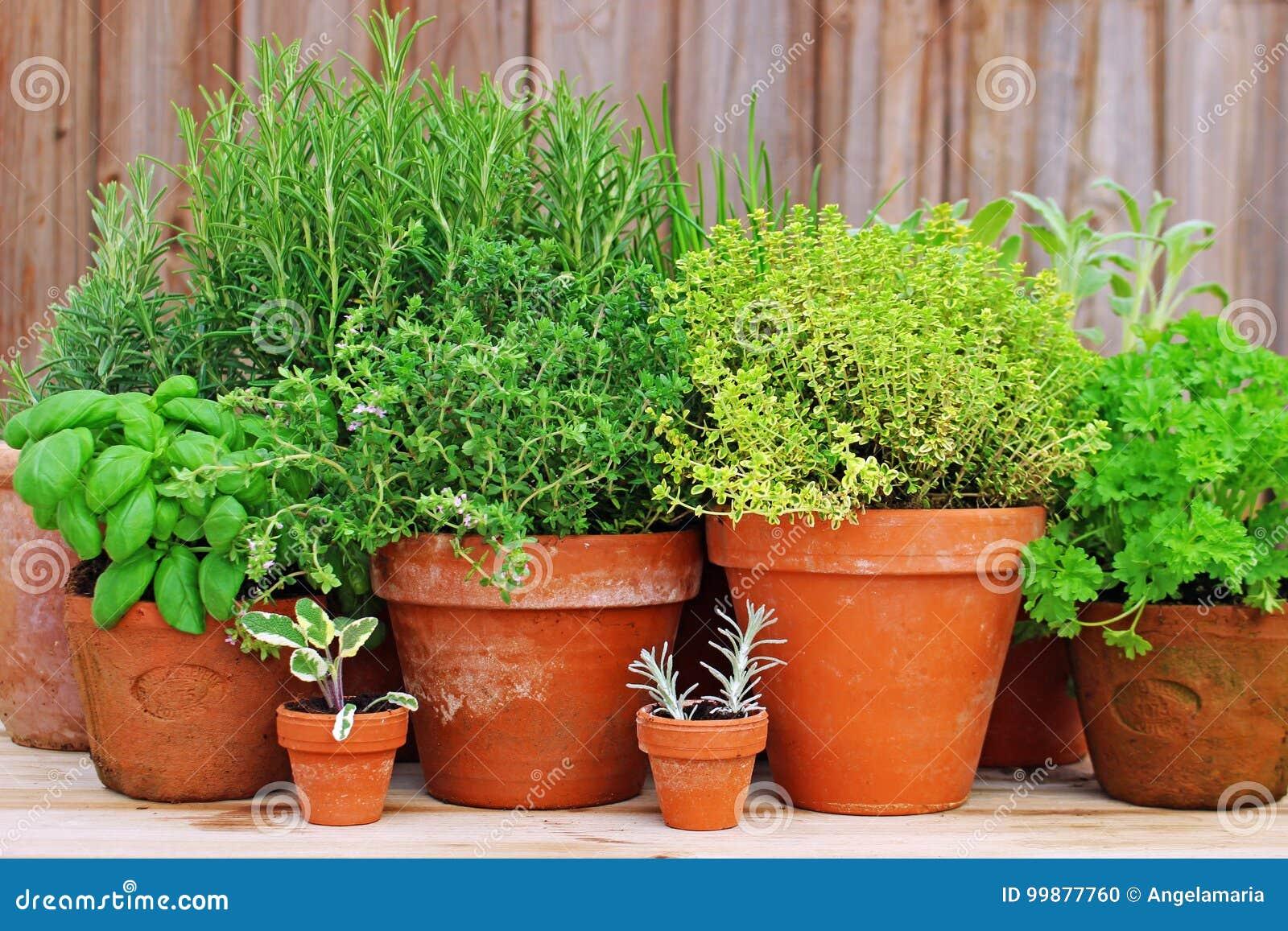 Prächtig Töpfe Kräuter im Garten stockfoto. Bild von chives, basilikum #EV_69