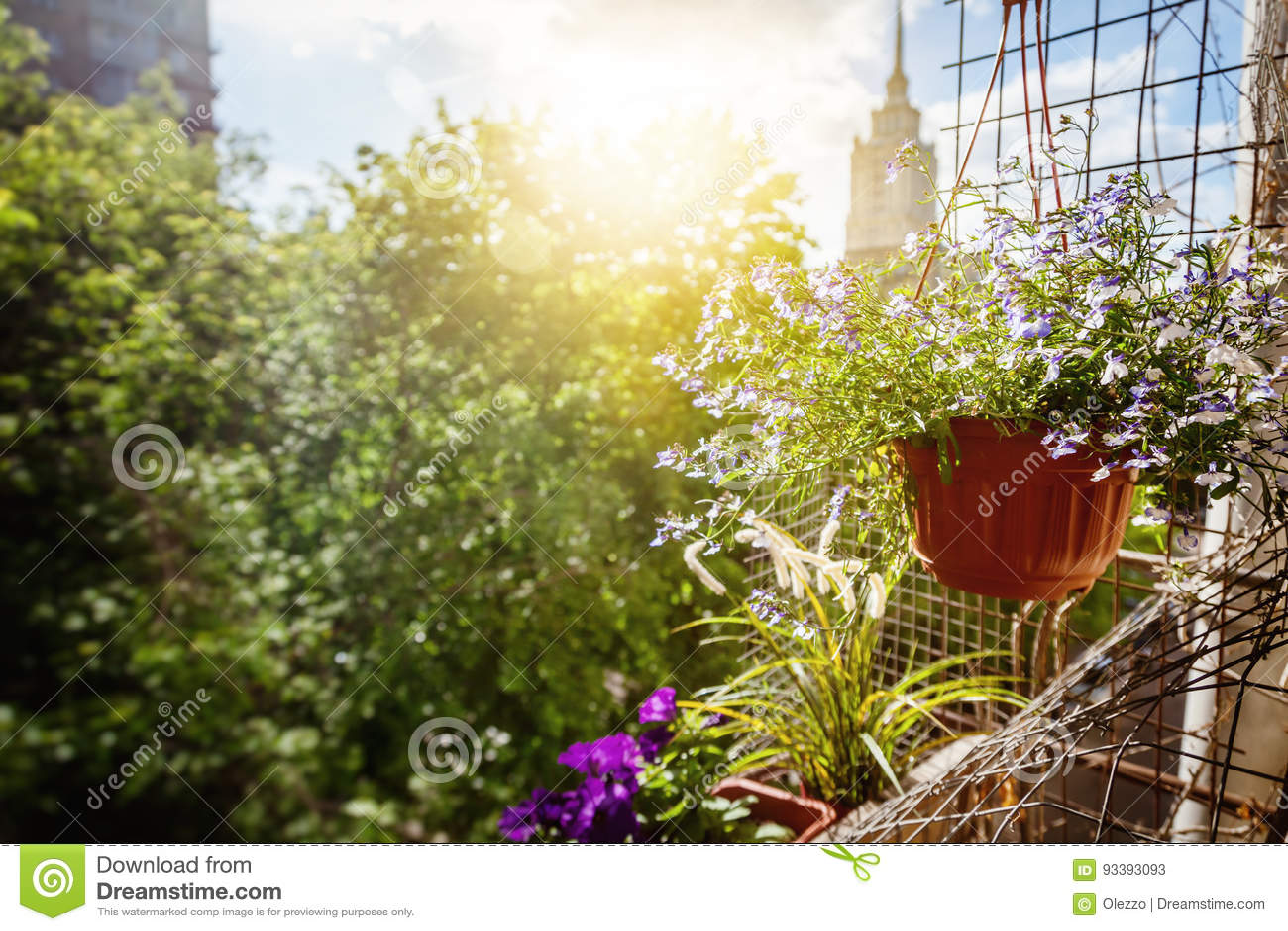 Topfe Mit Blumen Auf Dem Balkon Eine Sonnige Sommerstimmung