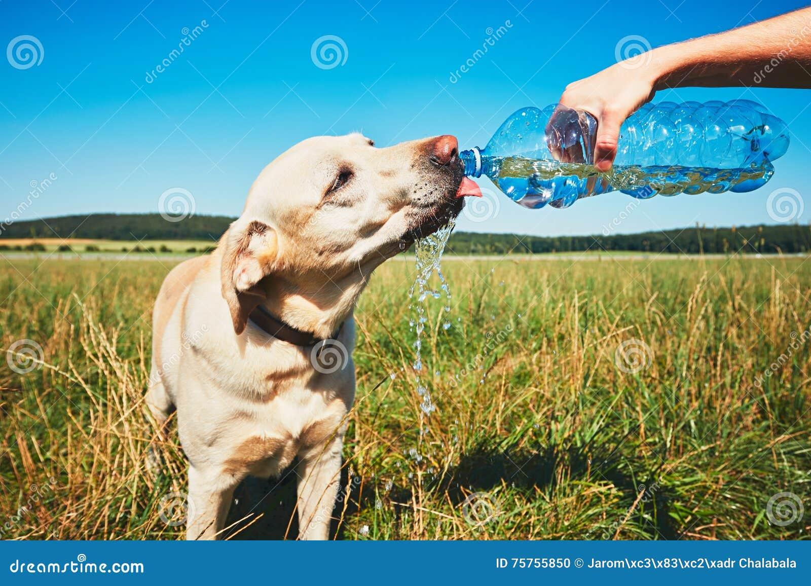 Törstig hund i varm dag