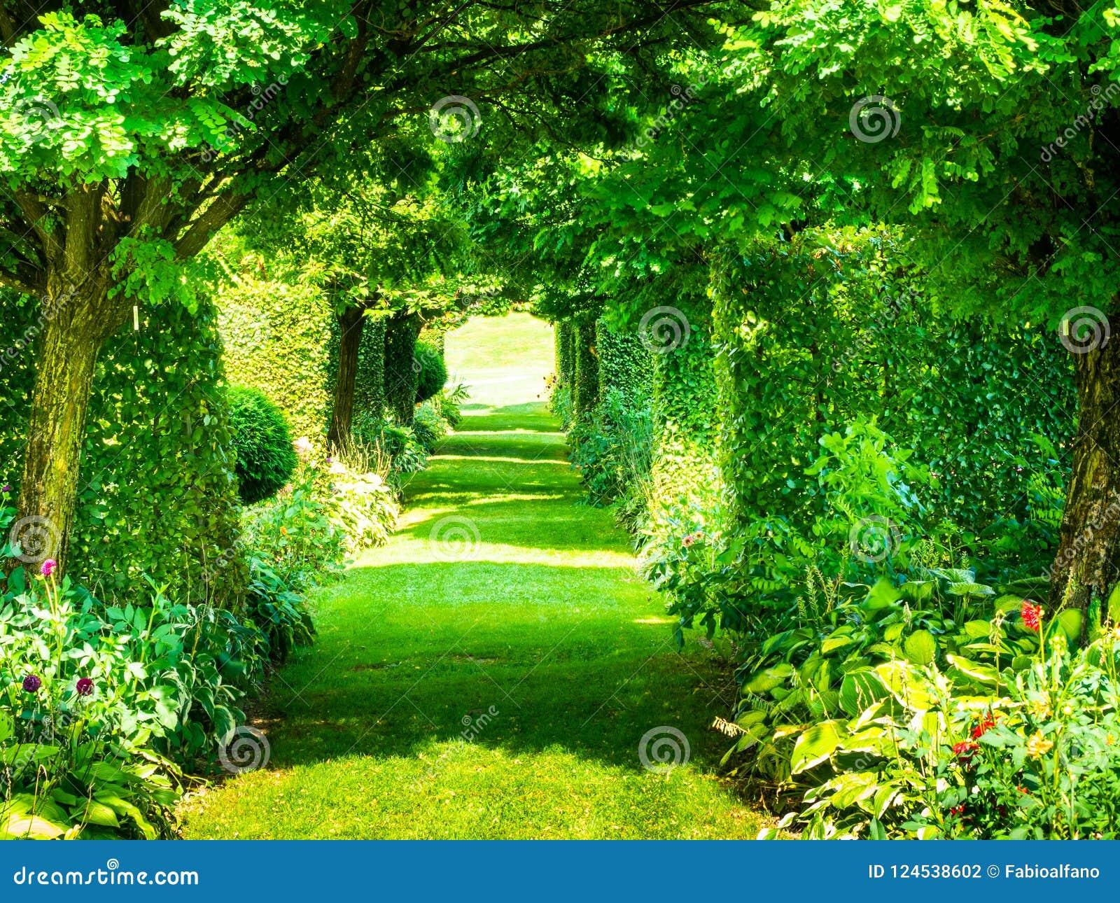 Túnel colorido de plantas verdes