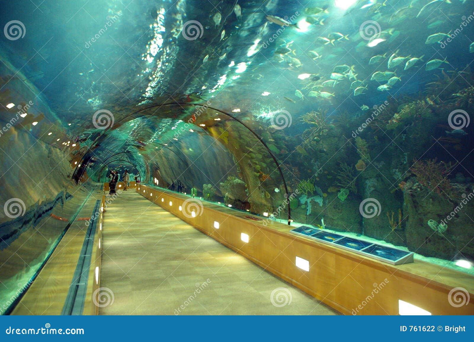 T nel de cristal bajo el mar foto de archivo imagen 761622 for Aquarium valencia precio