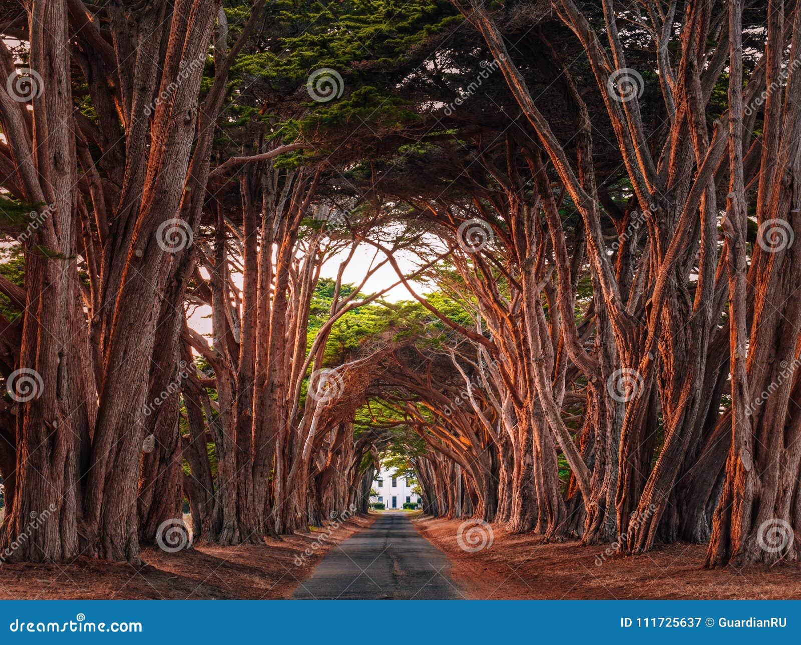 Túnel famoso de Cypress en California