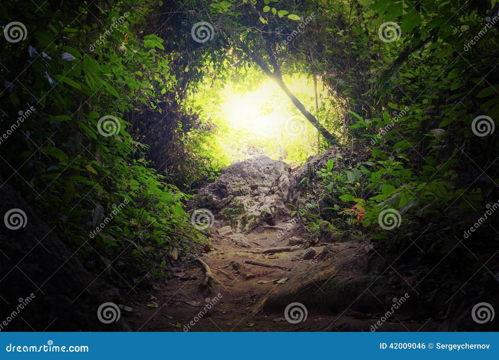 Túnel natural en bosque tropical de la selva
