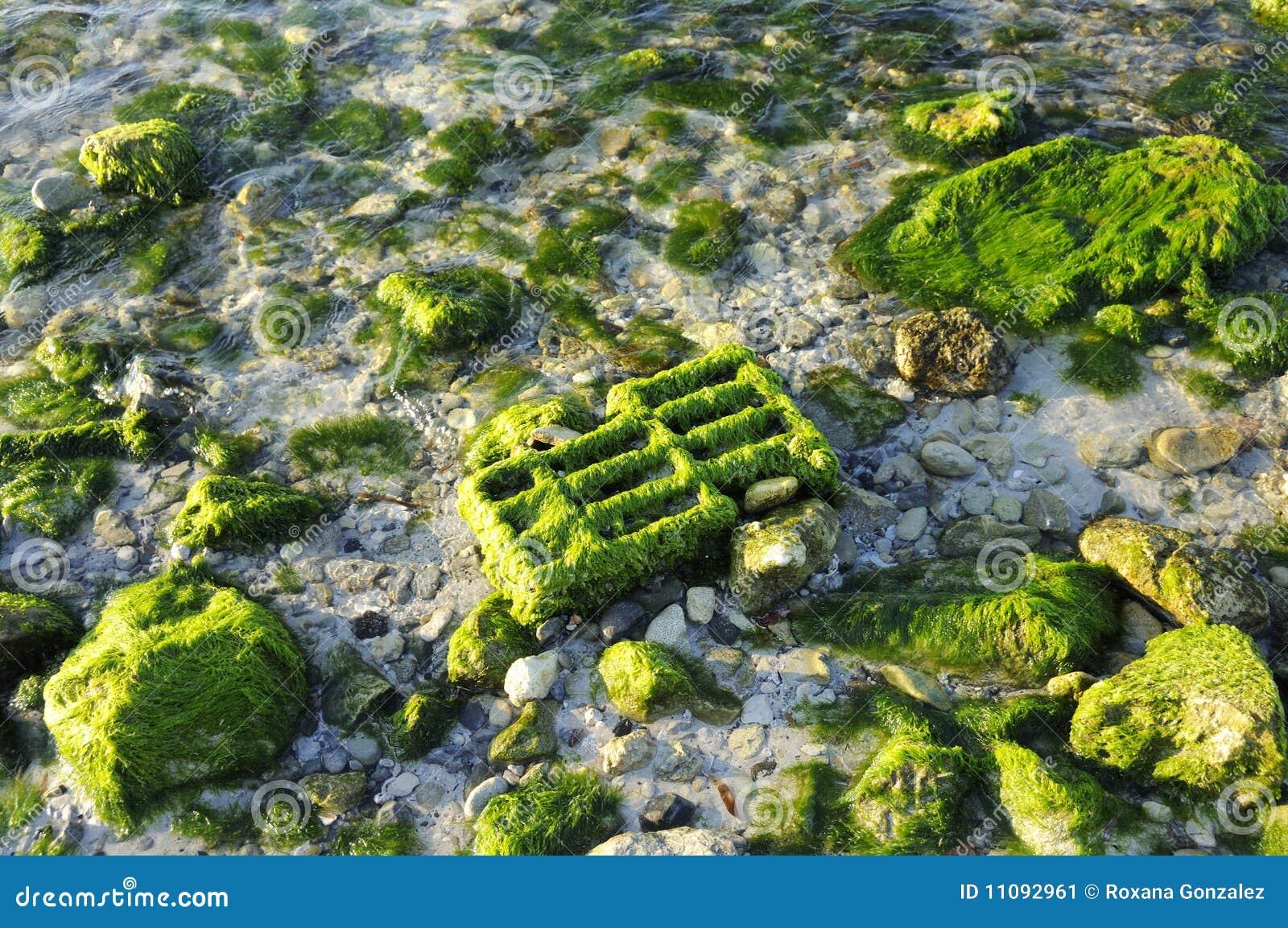 Tła beack skały