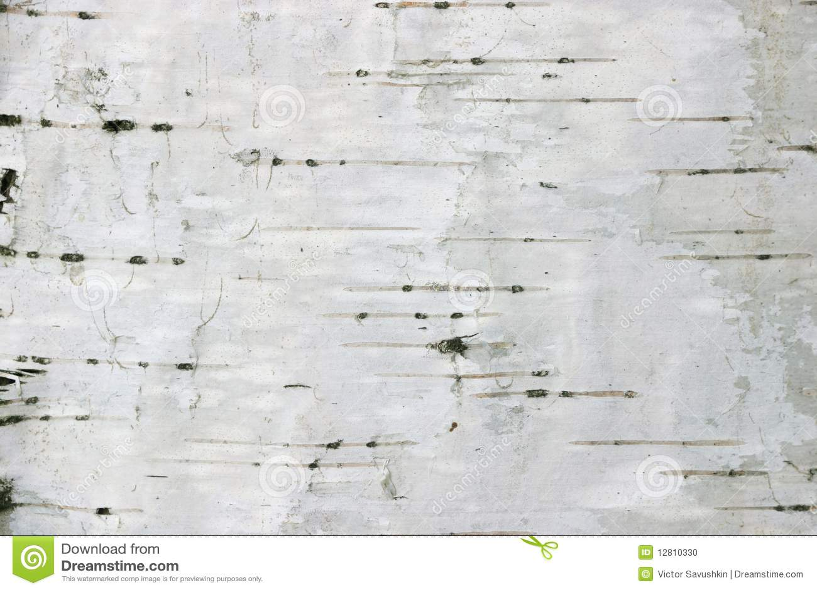 Tła brzozy tekstura