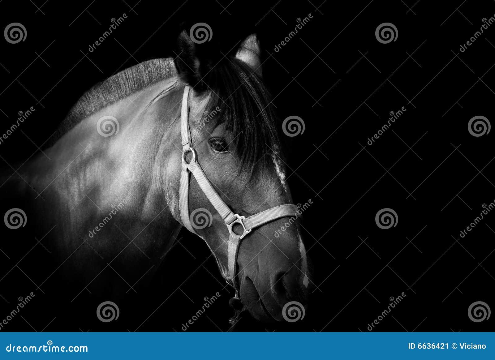 Tła ciemnego konia portret