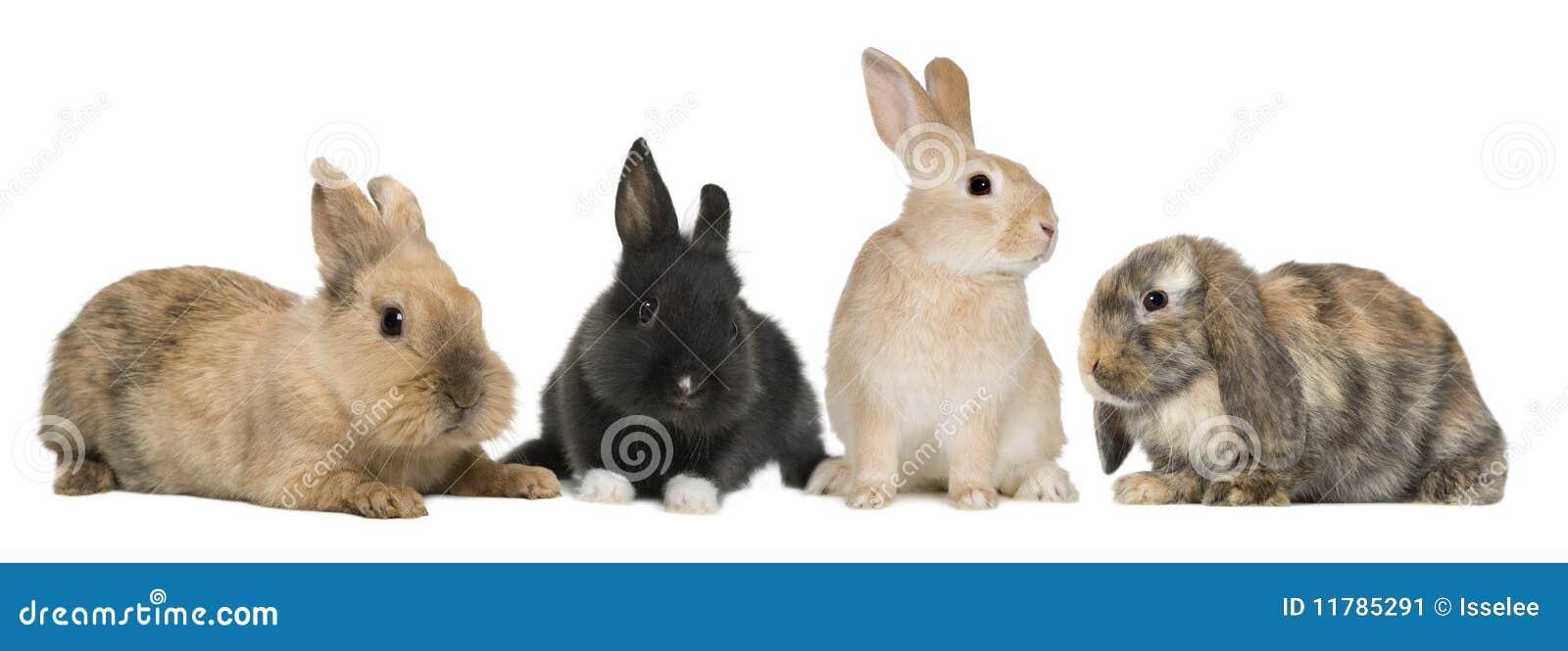 Tła królika przodu króliki target1140_1_ biel