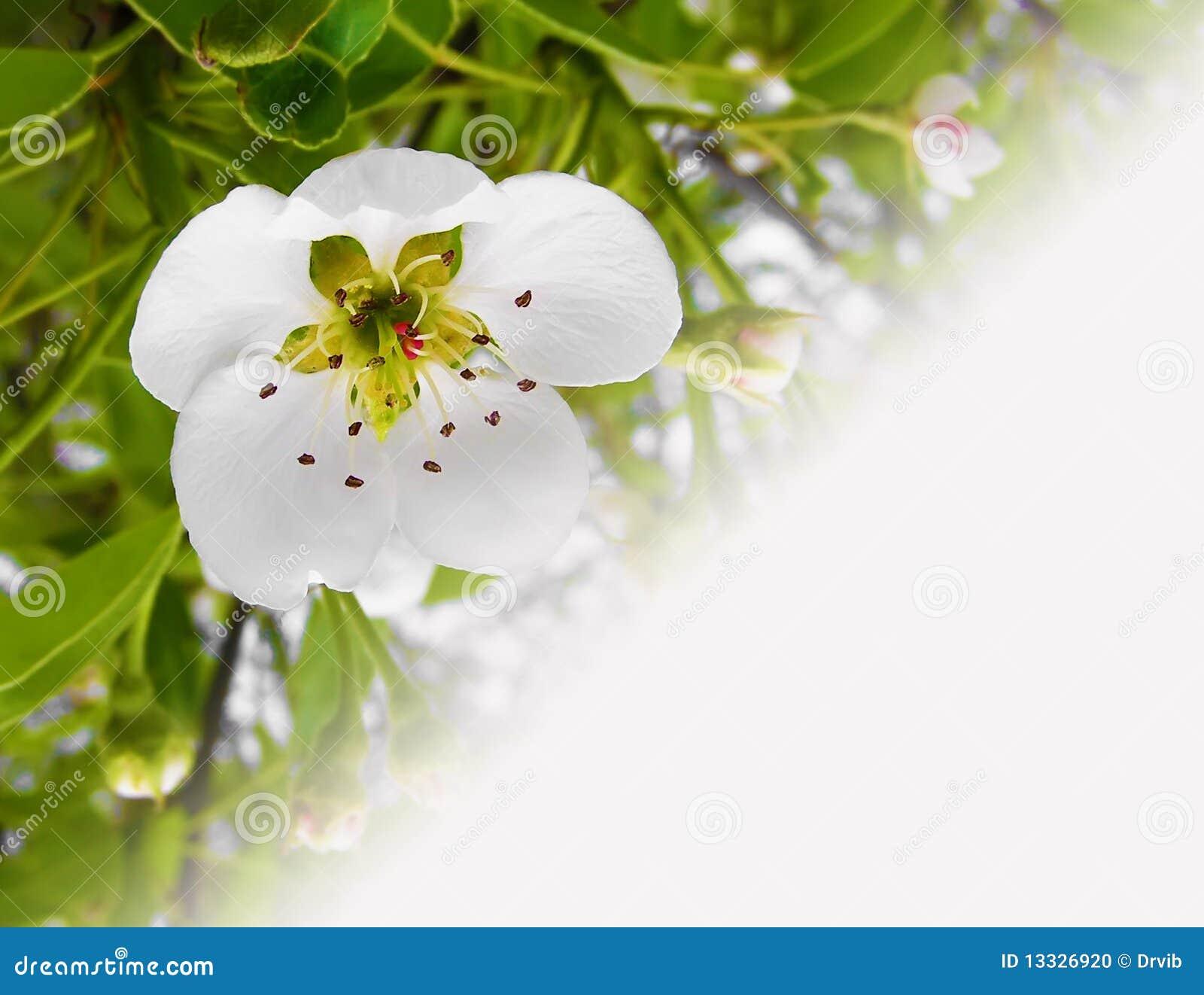 Tła podstawowy kwiatonośny makro- fotografii drzewo