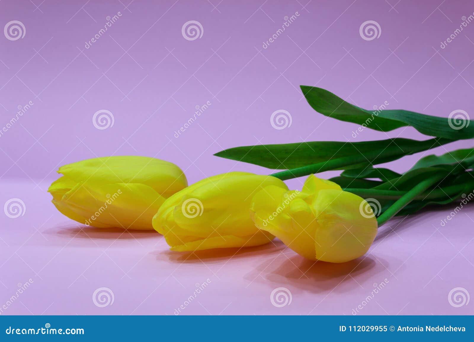Tła różowy tulipanów kolor żółty