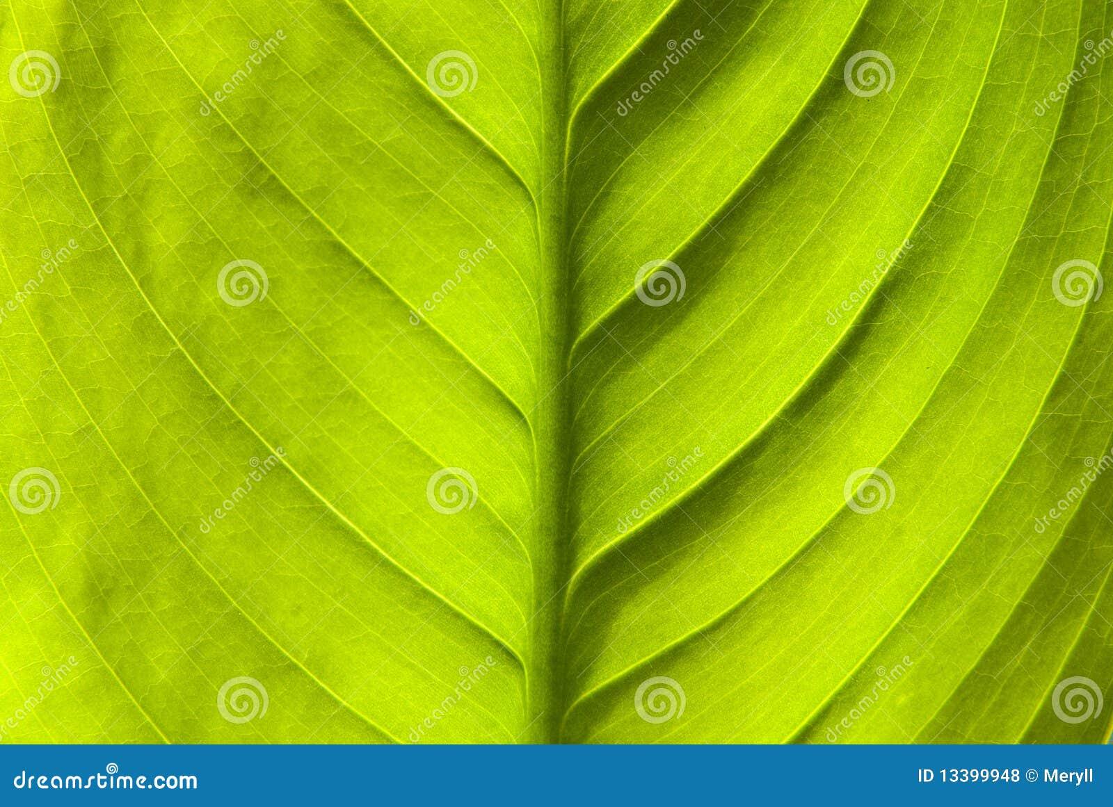 Tła zielona liść natura