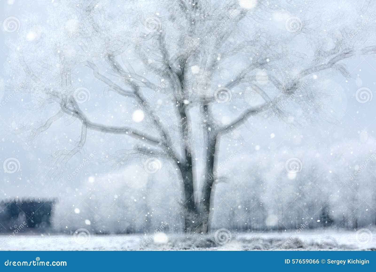 Tło śnieżny las