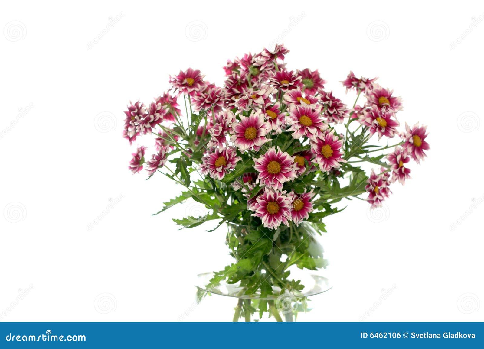 Tło białe kwiaty wazy