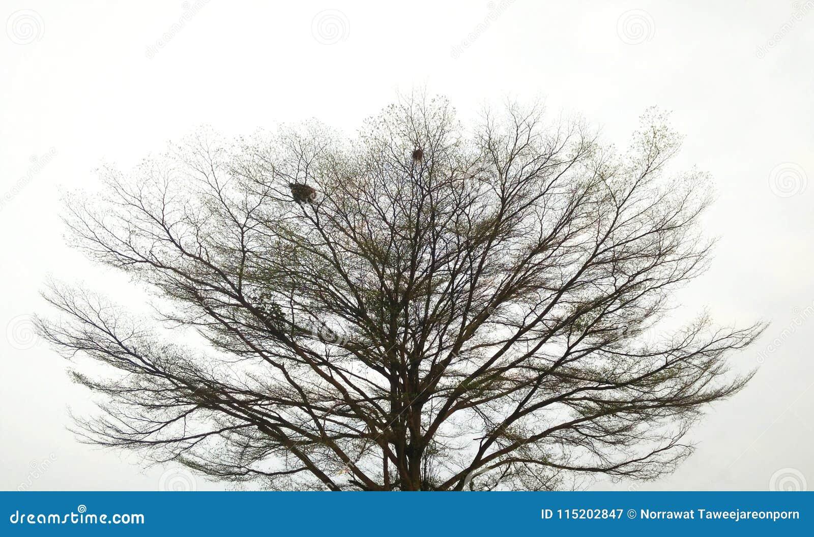 Tło ilustracyjnego pojedynczy obrazu drzewny white wektor