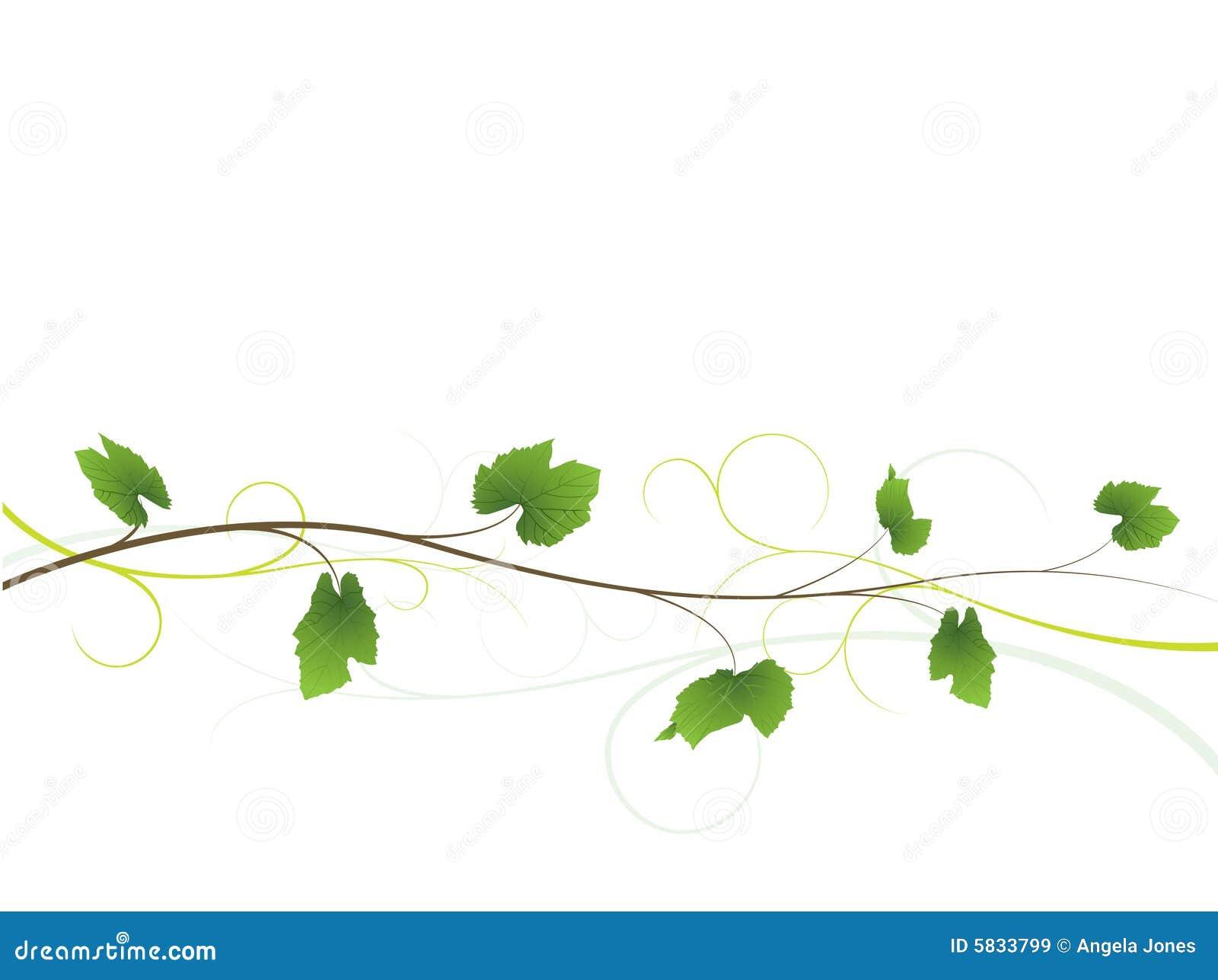 Tło kwiecisty winorośli
