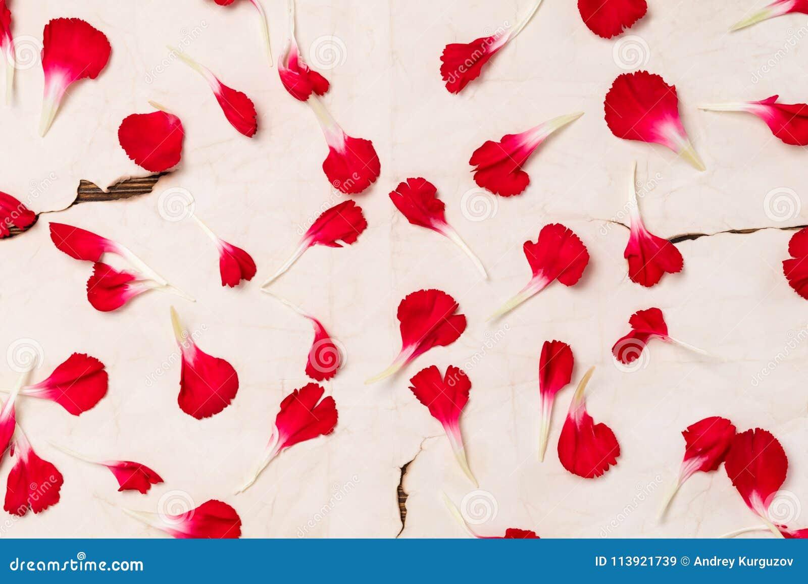Tło na starym papierze od płatków czerwony kwiat