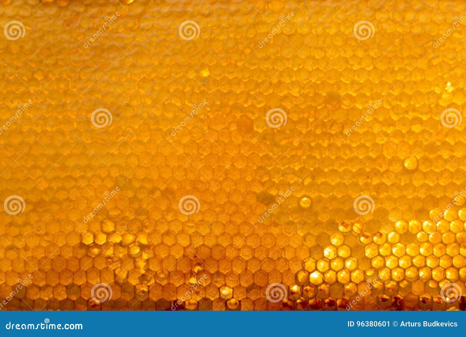 Tło tekstura i wzór sekcja wosku honeycomb od pszczoła roju wypełnialiśmy z złotym miodem