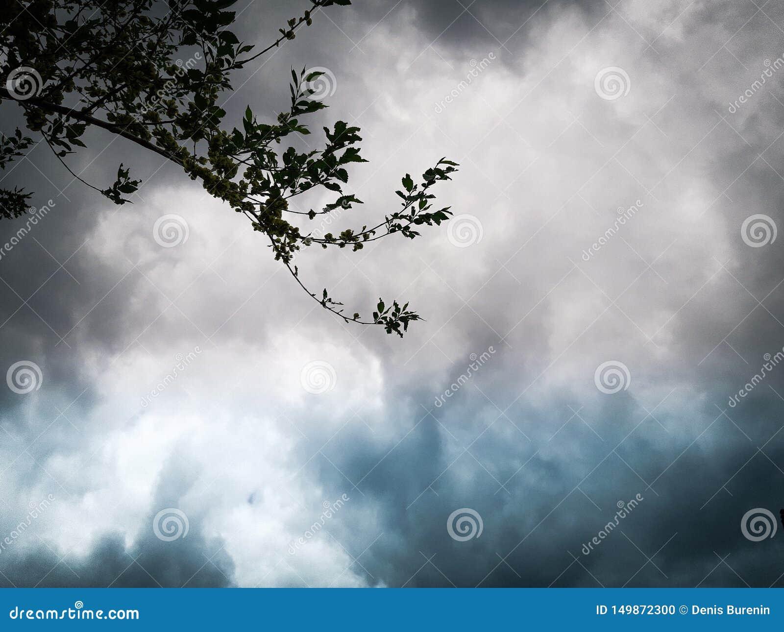 Tło wizerunek, piękne barwione chmury i gałązka,