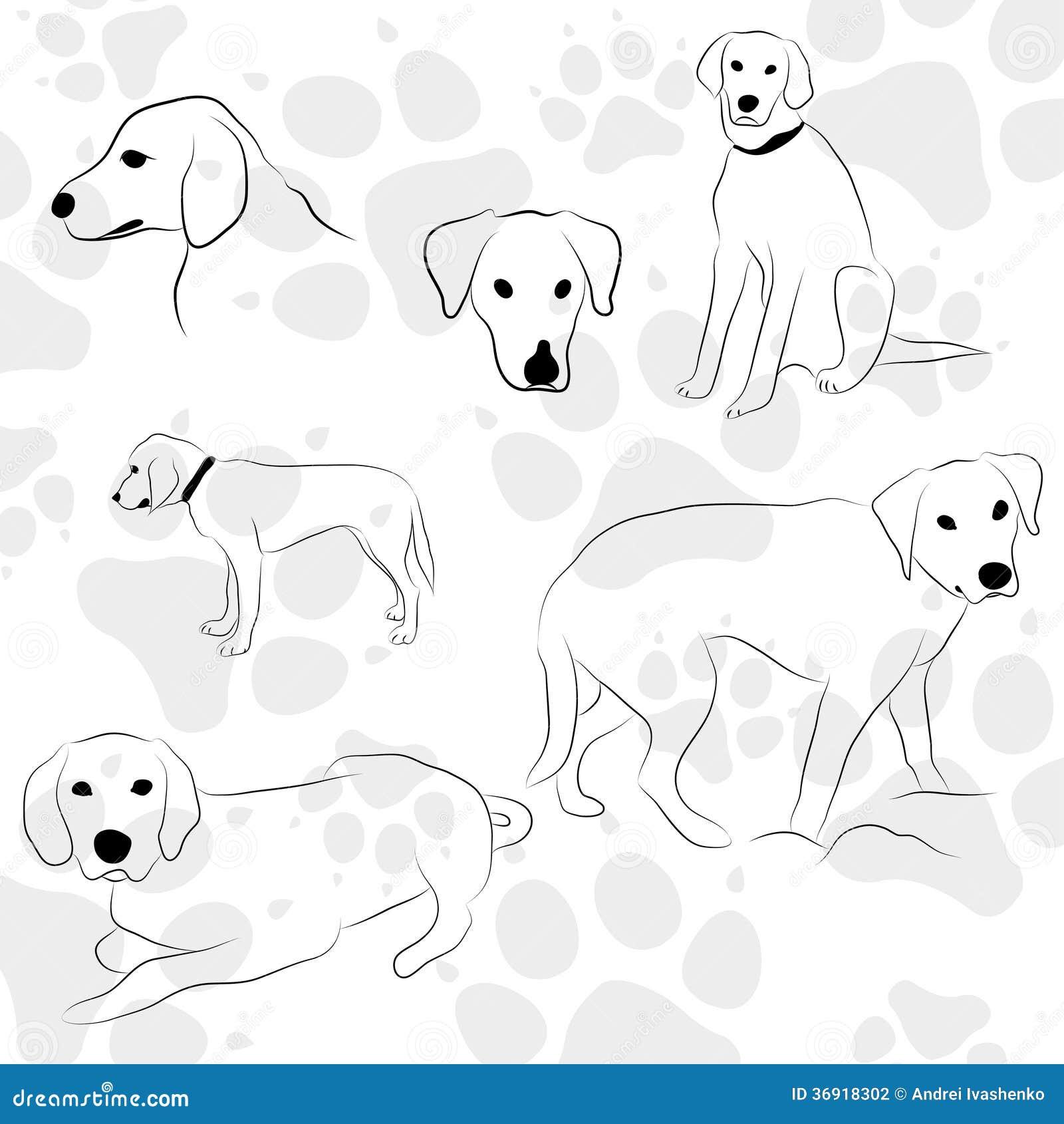 Tło z psimi łapami