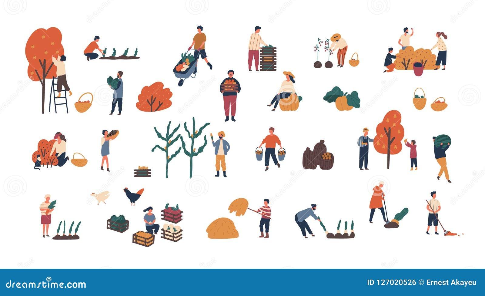 Tłum malutcy ludzie zbiera uprawy lub sezonowy żniwo plik mężczyzna i kobiety zbiera dojrzałe owoc, jagody i