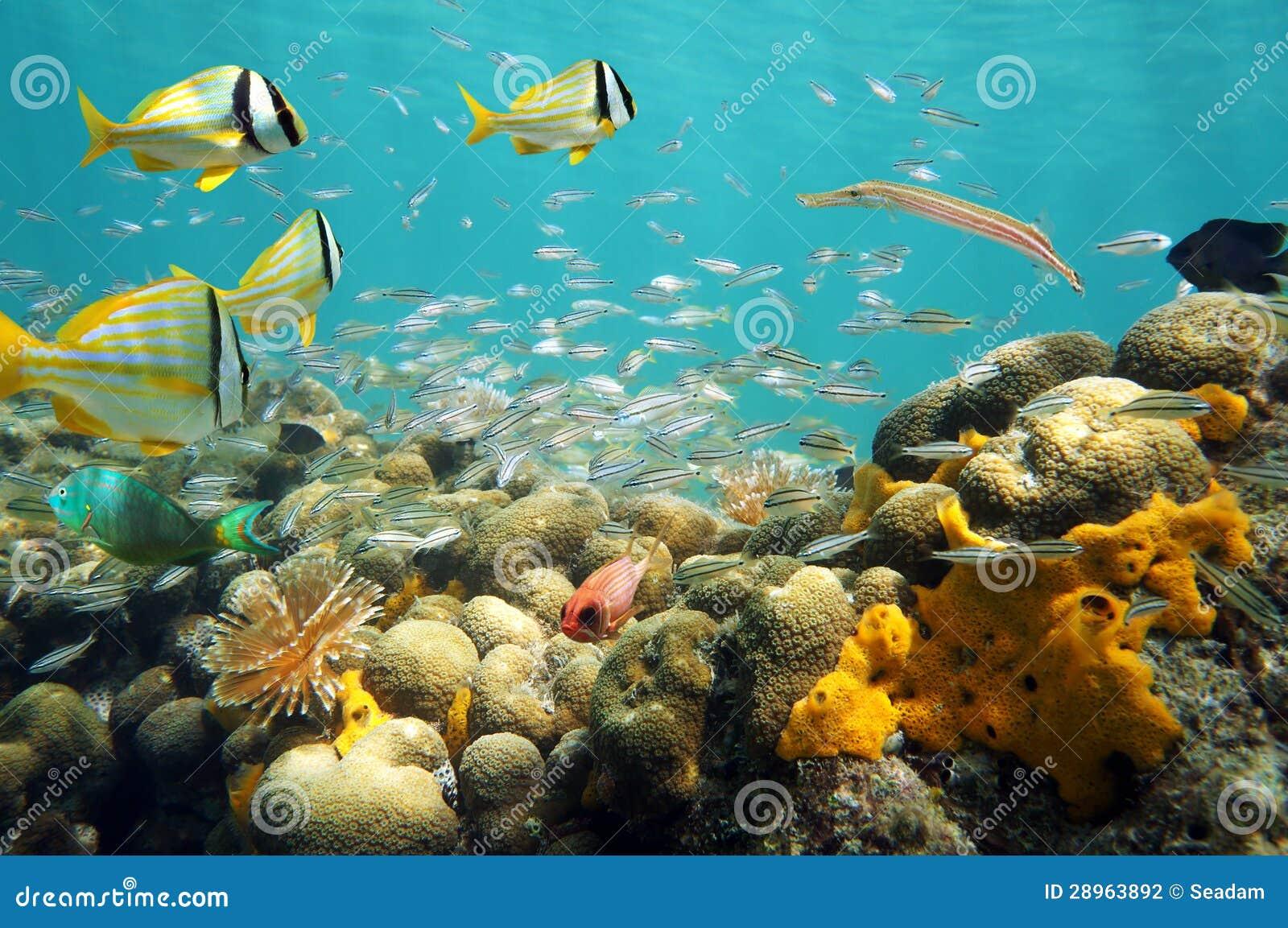 Tłum ryba w płytkiej rafie koralowa