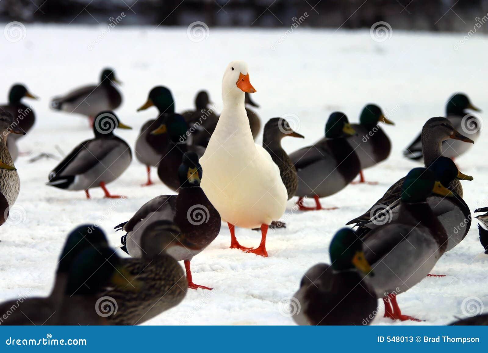 Tłum stoi na ciebie