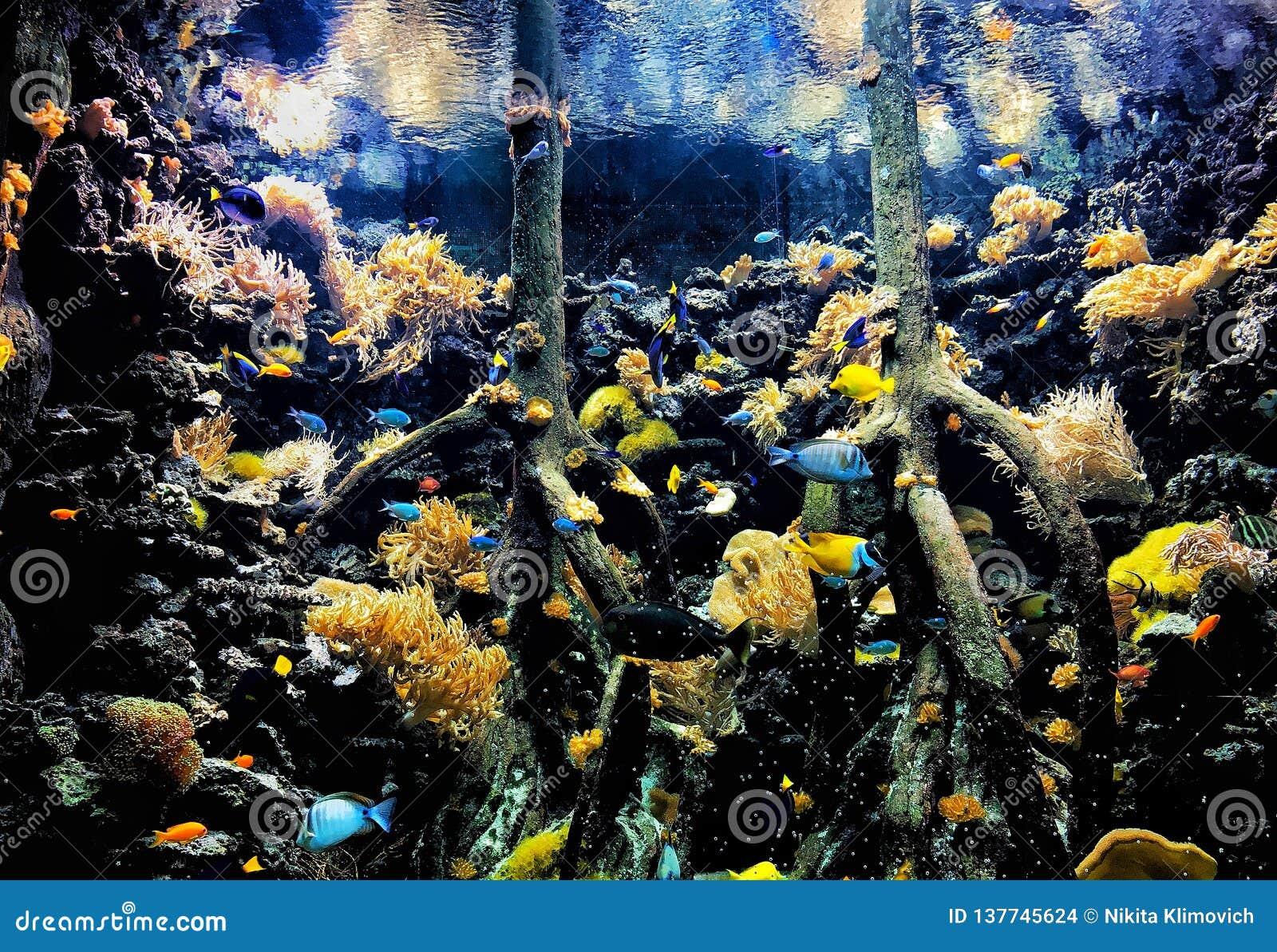 Tłumy ryba