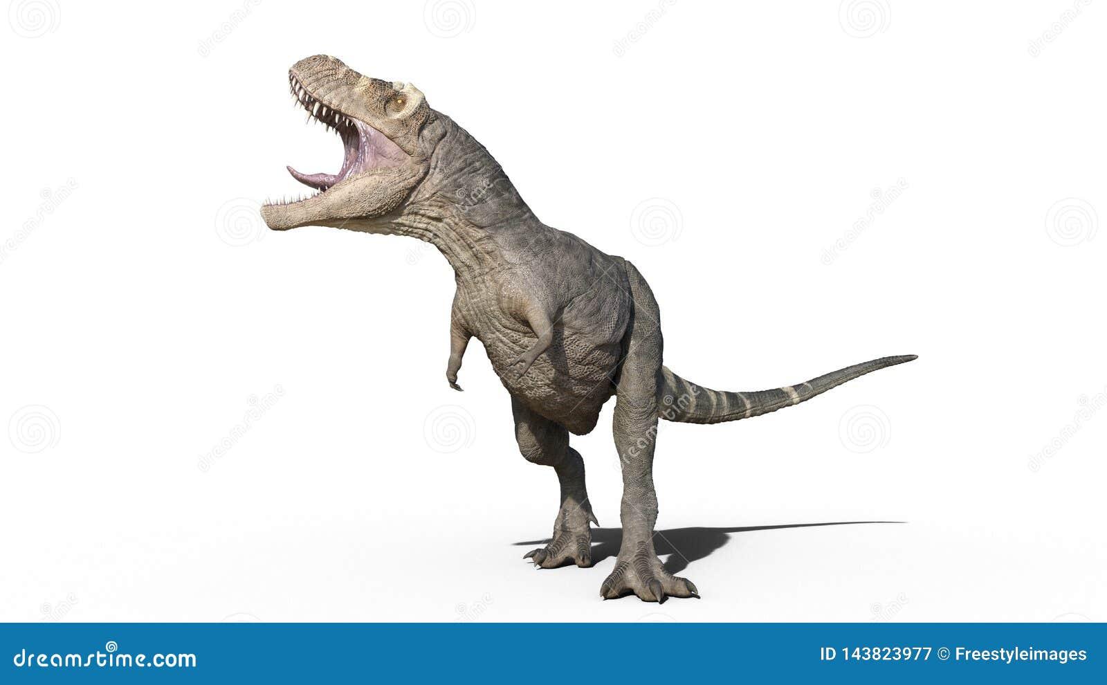 T雷克斯恐龙,暴龙雷克斯爬行动物吼声,在白色背景隔绝的史前侏罗纪动物,3D翻译