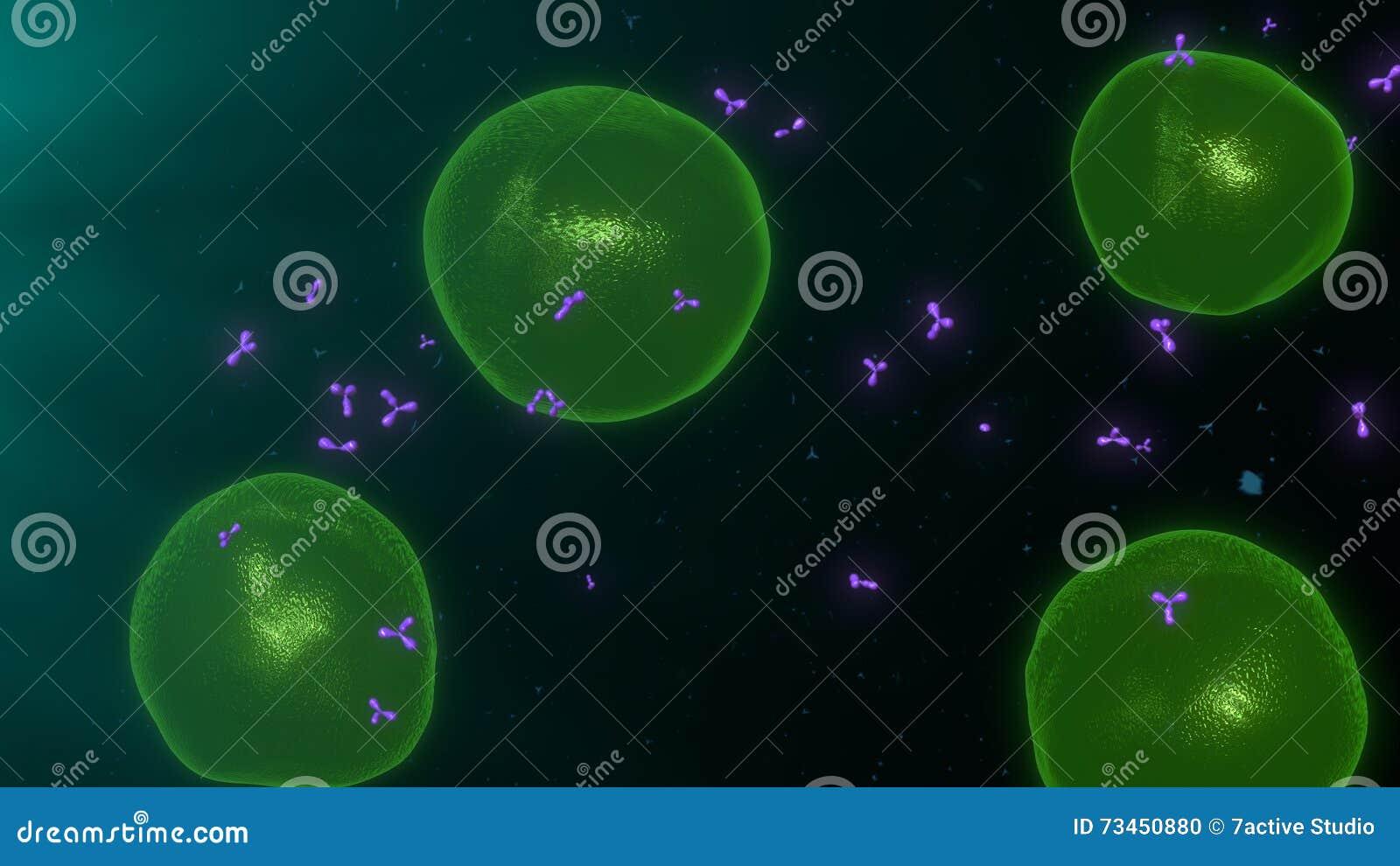 T-celler
