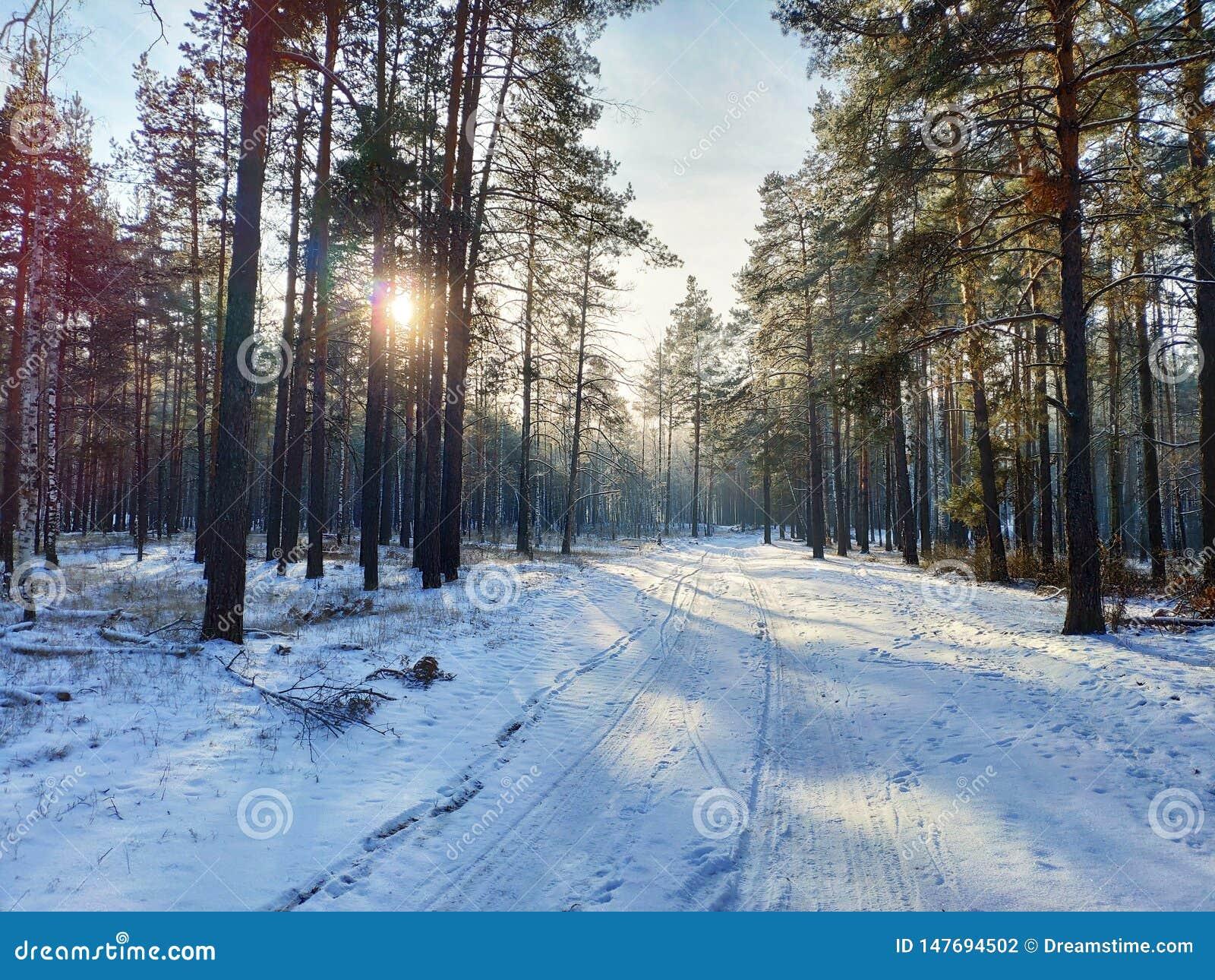 For?t d hiver au coucher du soleil