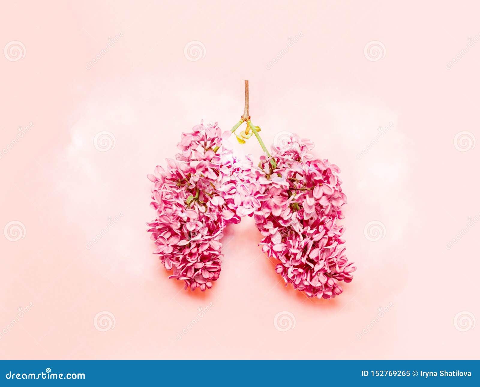 T?tt skadafoto som r?ker upp Medicinskt begrepp av rosa lila blommor som formas i mänskliga lungor på rosa bakgrund Lekmanna- l?g