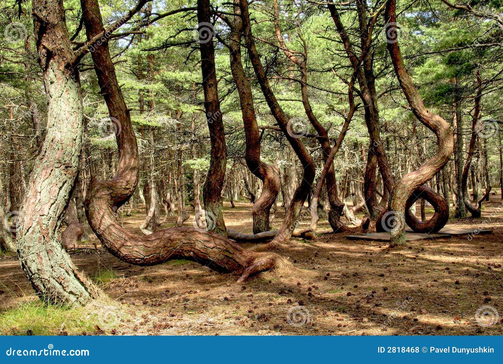 Tańczący las