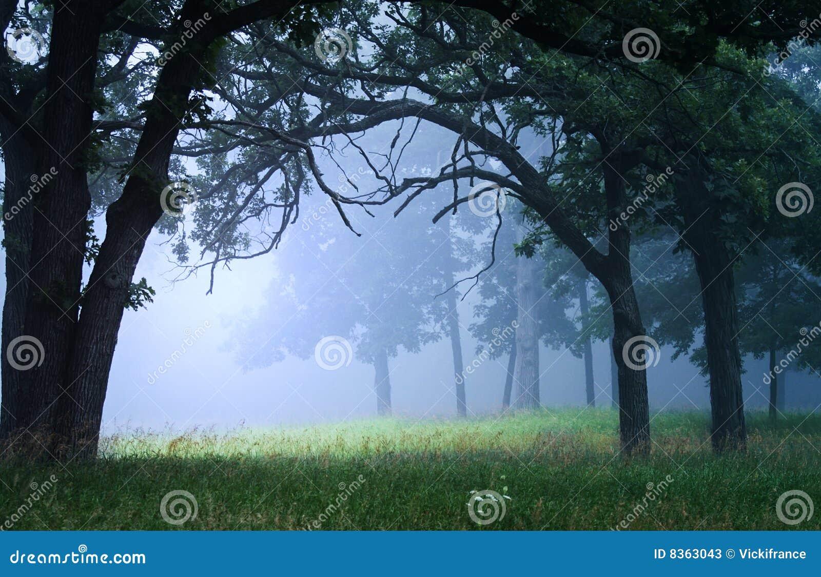 Ta bort som är dimmigt