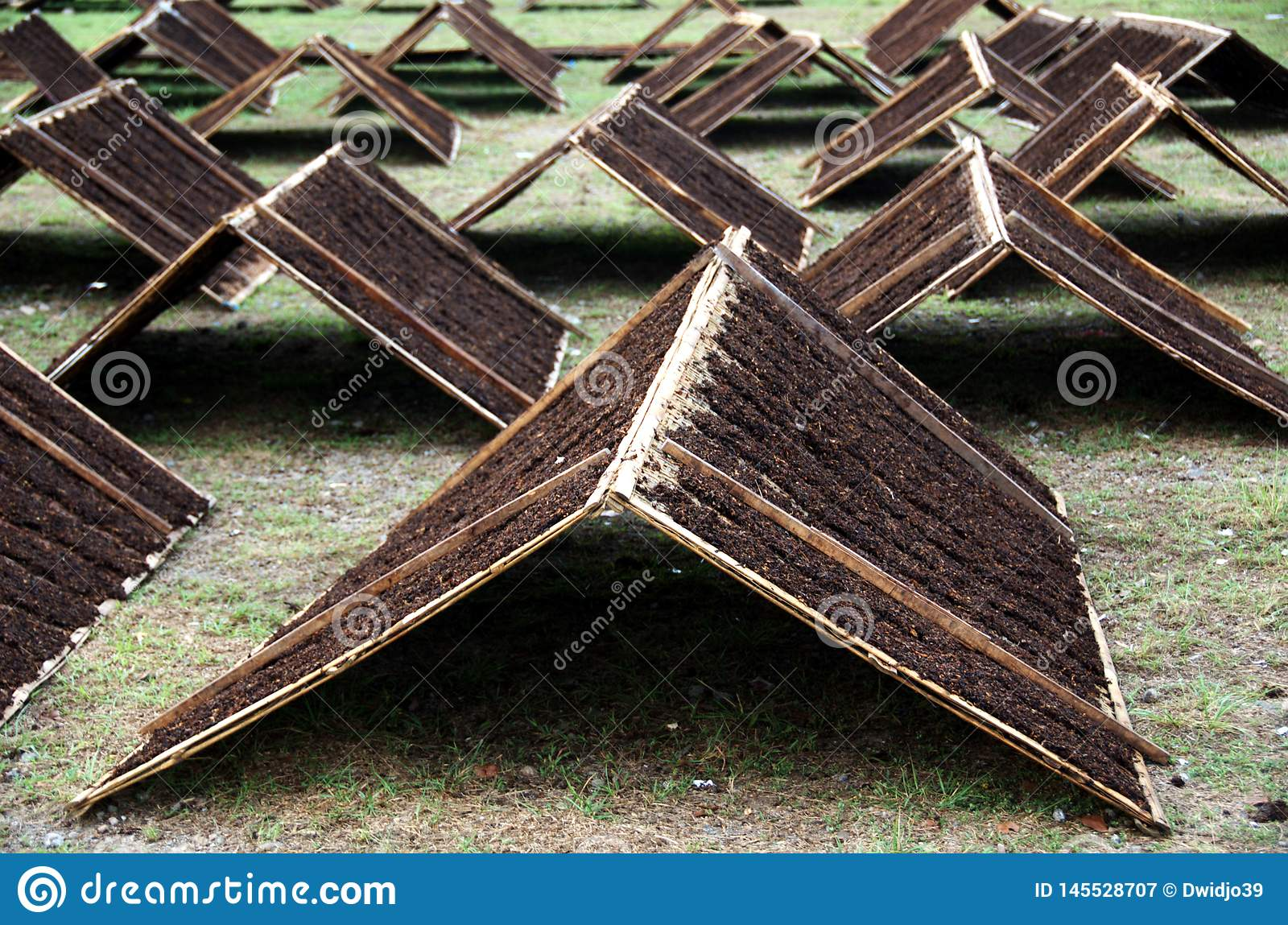Tabaco de Srintil de Temanggung Indonesia que se seca en el sol
