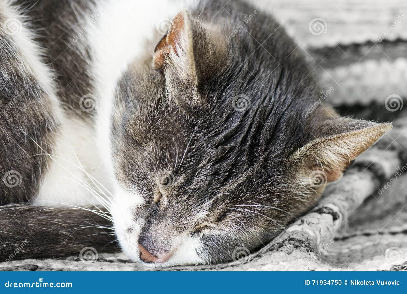Tabby спать кота